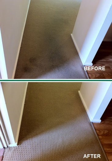 Carpet Cleaning by ChemDry Before & After